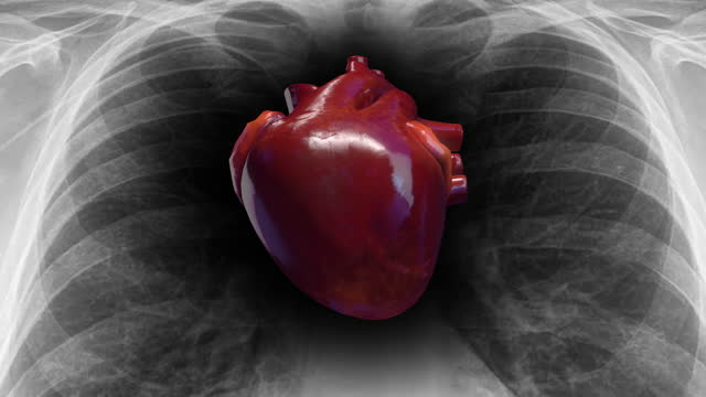 Human Circulatory System Heart Beat. X-Ray Skeleton On Background. Human Circulatory System Heart Beat. X-Ray Skeleton On Background. Science And Health Related 3D Animation. human heart stock videos & royalty-free footage