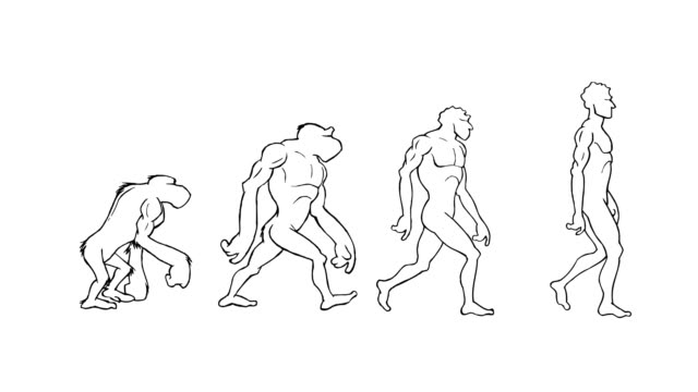Human evolution. 4 stages. Alpha matte. Loopable. Human evolution. Frame to frame hand made animation. From the ape to the homo-sapiens. Loop-able walk. Full HD. Animation created exclusively for iStockphoto. animal body stock videos & royalty-free footage