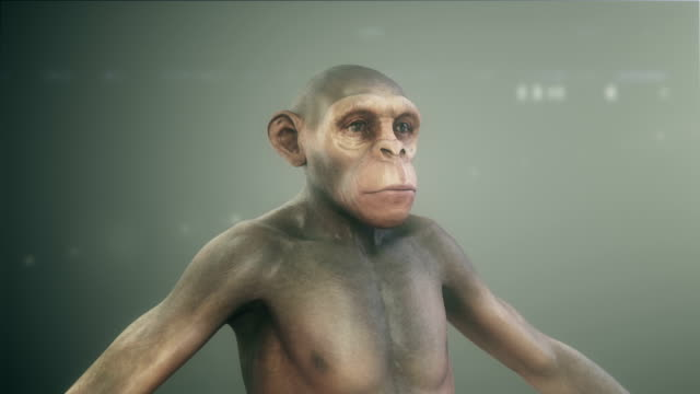 Human Evolution video