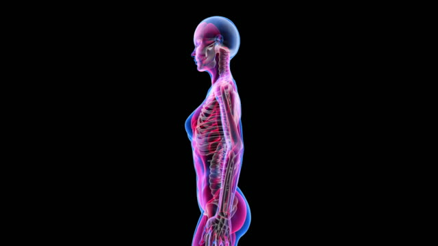 vídeos de stock e filmes b-roll de human female anatomy 3d animation biology science technology - anatomia