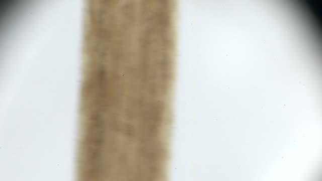 human hair under microscopy human hair under microscopy human hair stock videos & royalty-free footage