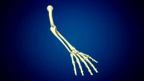 Human Hand Anatomy Human Hand Anatomy Animation limb body part stock videos & royalty-free footage
