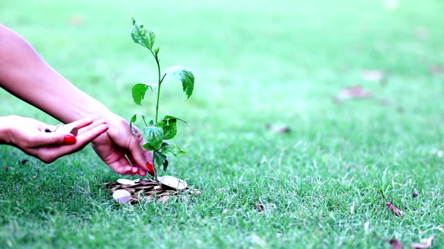 HD: Human hand and planting coin tree concept video