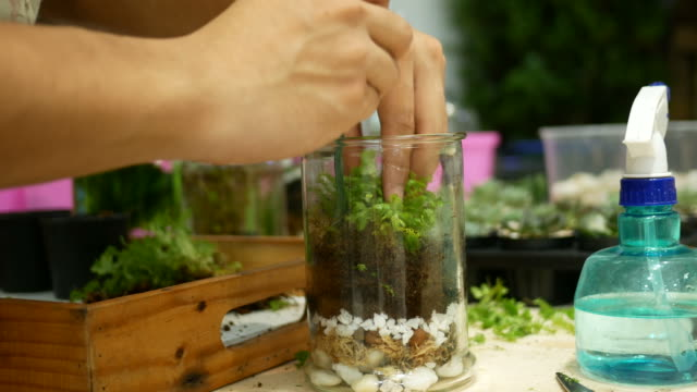 human hand growing cactus in transparent vase video