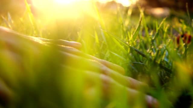 vídeos de stock e filmes b-roll de human hand touching grass - suavidade