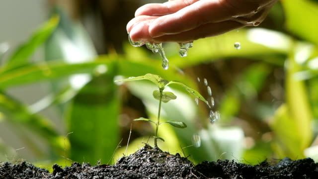 Human hand watering plant seedling slow motion shot Male hand plant watering slow motion shot watering stock videos & royalty-free footage
