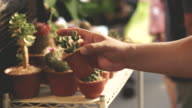 istock Human hand while choosing cactus at the garden market -video stock 911626304