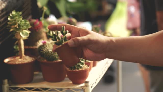 mänsklig hand samtidigt välja cactus på garden market - video lager - liten bildbanksvideor och videomaterial från bakom kulisserna