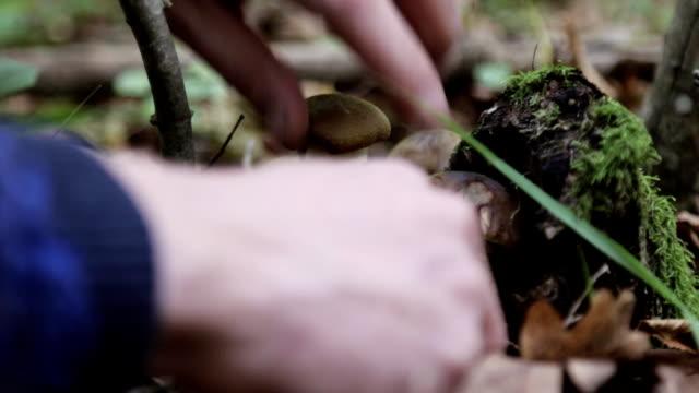 mänskliga händer skärs svamp i skogen på hösten. närbild. - höst plocka svamp bildbanksvideor och videomaterial från bakom kulisserna