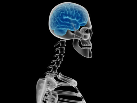 Human head with brain and bones X-ray of a human head with brain and bones, spinning, isolated on black background. hypothalamus stock videos & royalty-free footage