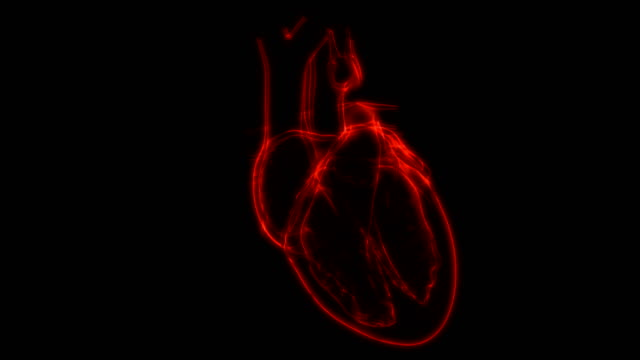 Human Heart Beat Anatomy Animation Concept 3D Animation Concept of Human Heart Beat Anatomy human heart stock videos & royalty-free footage