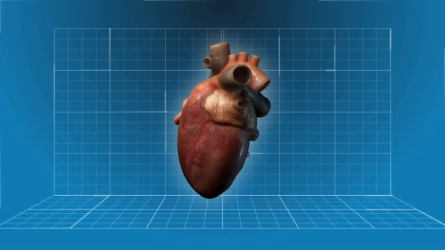 Human Heart beating - 360 turnaround video