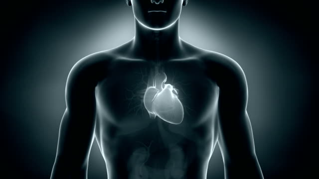 Human heart in loop Human heart in loop in 3D human heart stock videos & royalty-free footage