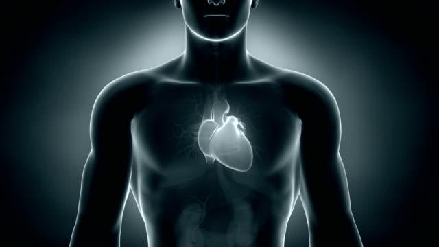 serce człowieka w pętli - serce człowieka filmów i materiałów b-roll
