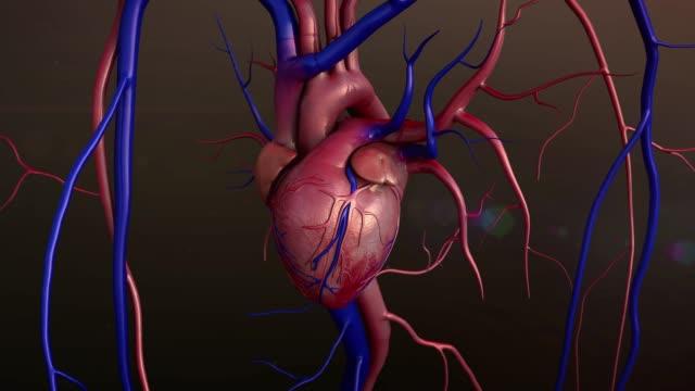 vídeos de stock e filmes b-roll de human heart model - aorta