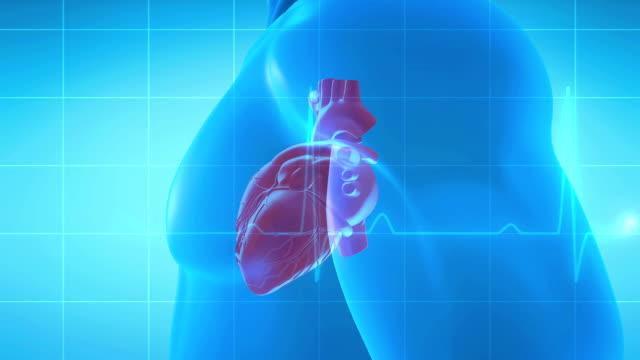 vídeos de stock e filmes b-roll de human heart spinning - coração humano