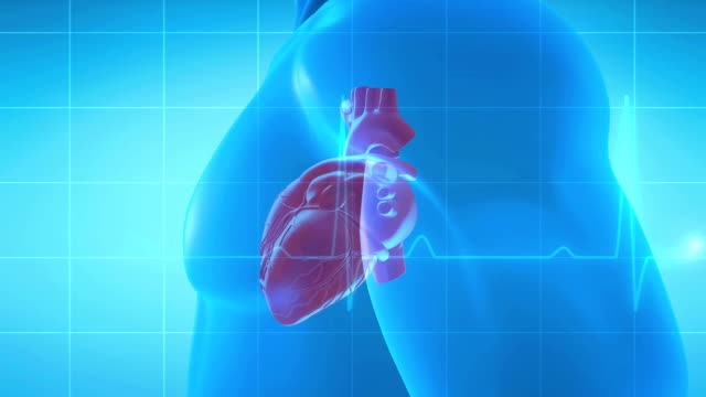 human heart spinning - cuore umano video stock e b–roll