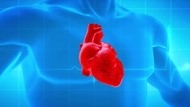 Human Heart Human heart animation heart internal organ stock videos & royalty-free footage