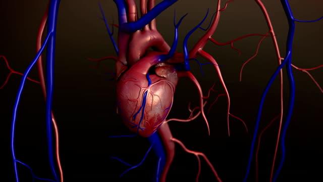 vídeos de stock e filmes b-roll de coração humano - enfarte