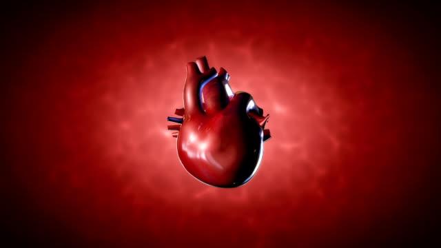 vídeos de stock e filmes b-roll de coração humano - ventrículo do coração