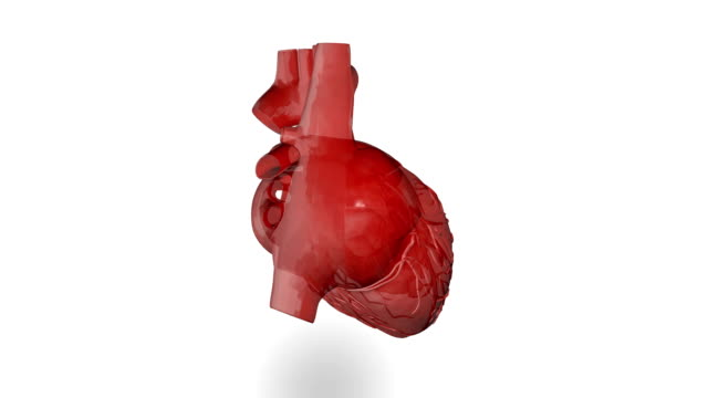Human heart (loopable) Human heart (loopable) heart internal organ stock videos & royalty-free footage