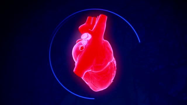 Human Heart Human Heart Rotating Animation. heart internal organ stock videos & royalty-free footage
