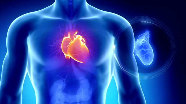 vídeos de stock e filmes b-roll de coração humano com o tórax em azul de raio-x laranja vista - coração humano