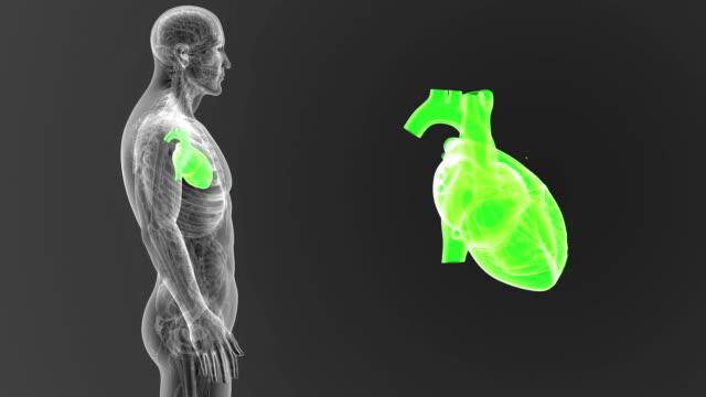 vídeos de stock e filmes b-roll de human heart zoom with anatomy - ventrículo do coração