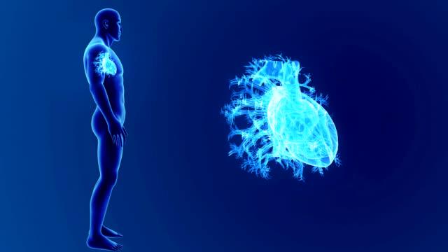 vídeos de stock e filmes b-roll de human heart zoom with body - ventrículo do coração
