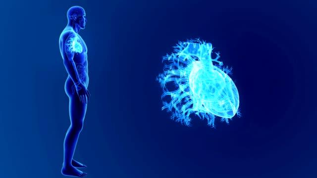 vídeos de stock e filmes b-roll de human heart zoom with organs - ventrículo do coração