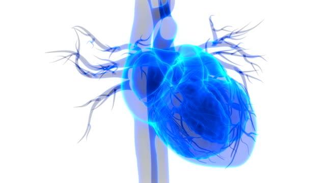 vídeos de stock e filmes b-roll de human heartbeat anatomy - coração humano