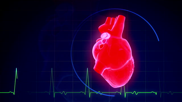 Human Heartbeat With Pulse Waveform Abstract Human Heartbeat Background heart internal organ stock videos & royalty-free footage