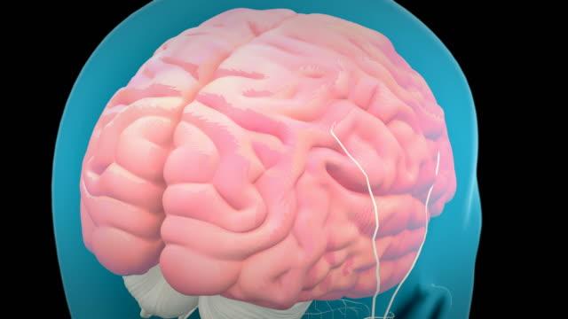 Videos de Glándula Pituitaria y Videos Libre de Derecho - iStock