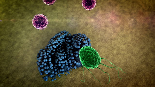 Human Immune System attack the fungus video