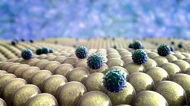 human immune system video