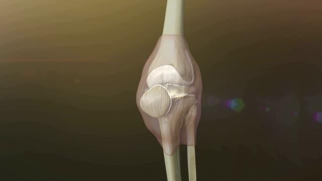 人間の膝、むくみをみるみる解消 - 人の筋肉点の映像素材/bロール
