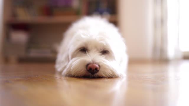 umano fammi dormire! - ambientazione tranquilla video stock e b–roll