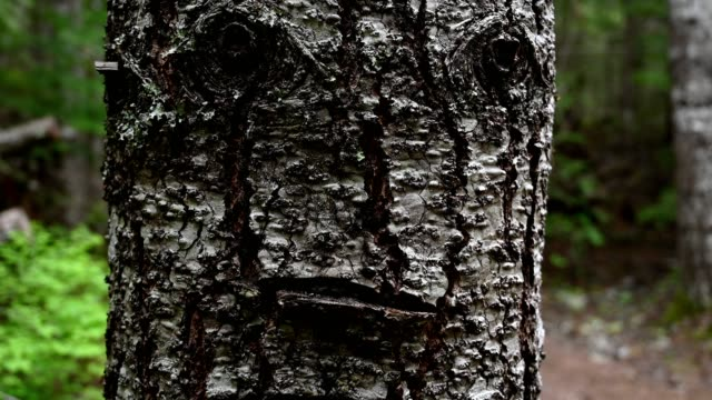 Human looking face in nature