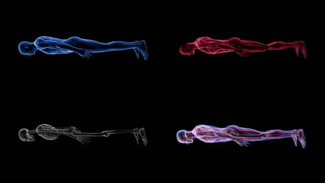 vídeos y material grabado en eventos de stock de animación 3d de anatomía humana masculina biología ciencia tecnología - escán médico