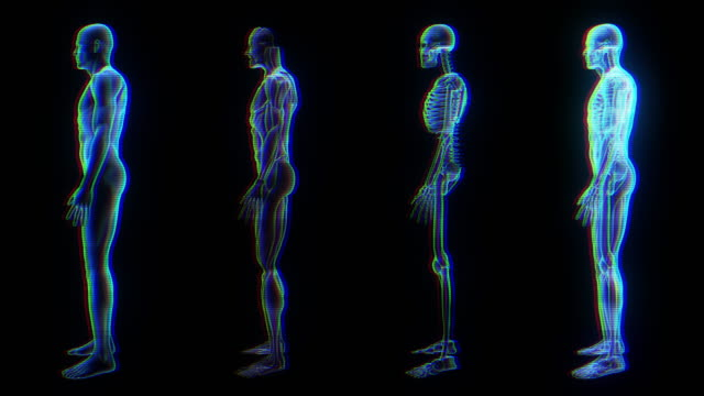 human male anatomy 3d animation biology science technology - radiografia video stock e b–roll