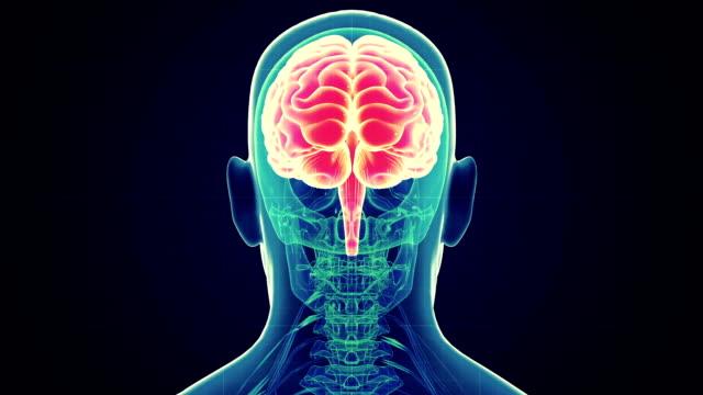 human male brain scan - aktivite stok videoları ve detay görüntü çekimi