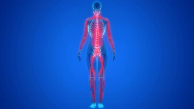människans nervsystem anatomi - kroppsdel bildbanksvideor och videomaterial från bakom kulisserna
