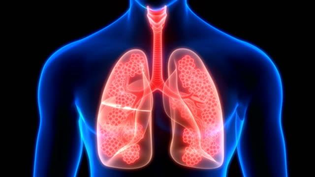 Human Respiratory System Lungs Alveoli Anatomy 3D Animation Concept of Human Respiratory System Lungs Alveoli Anatomy emphysema stock videos & royalty-free footage