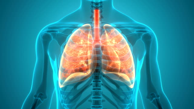 Human Respiratory System Lungs Anatomy Animation Concept 3D Animation Concept of Human Respiratory System Lungs Anatomy emphysema stock videos & royalty-free footage
