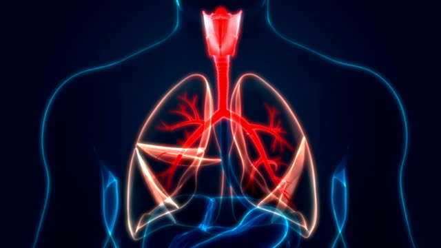 Human respiratory System Lungs Anatomy 3D Illustration of Human Respiratory System Lungs Anatomy emphysema stock videos & royalty-free footage