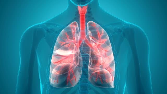 menschlichen atemwege lunge anatomie - aktivitäten und sport stock-videos und b-roll-filmmaterial