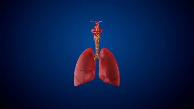 menschliches atemsystem lunge - atemübung stock-videos und b-roll-filmmaterial