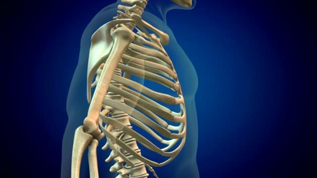 human rib cage - clavicola video stock e b–roll
