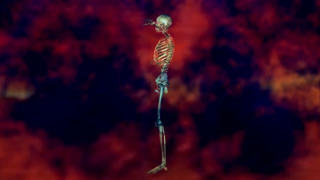 Human Skeleton Animation Animation of a Human Skeleton dead animal stock videos & royalty-free footage