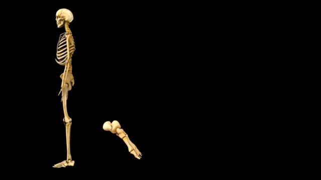 Human Skeleton foot video